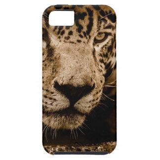 Jaguar Water Stalking Eyes Menacing Fearsome Male iPhone 5 Covers