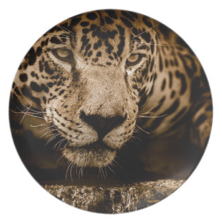 Jaguar Water Stalking Eyes Menacing Fearsome Male Plate