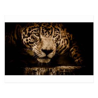 Jaguar Water Stalking Eyes Menacing Fearsome Male Postcard