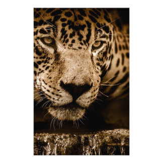 Jaguar Water Stalking Eyes Menacing Fearsome Male Stationery