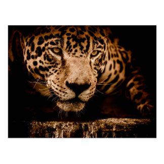 jaguar water stalking eyes postcard