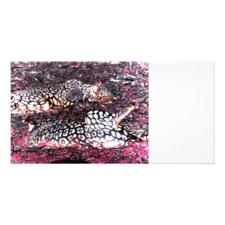 jaguars lying down purple black inverted photo card template