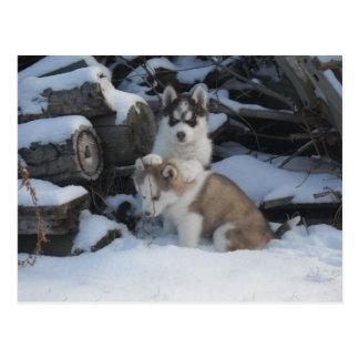 Jaida and Zayda by the Woodpile Postcard