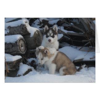 Jaida & Zayda hiding in the woodpile Card