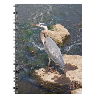 Jake Notebook