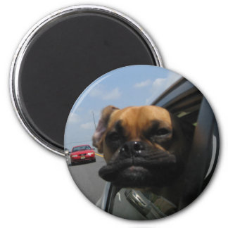 Jake the Puggle Magnet