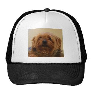 Jake The Yorkie Terrier Trucker Hat