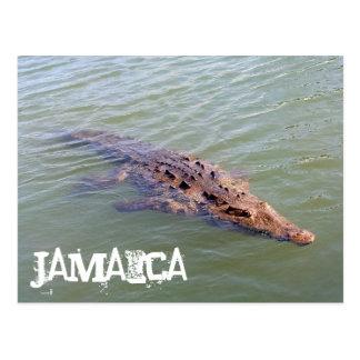 Jamaica Alligator Postcard