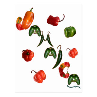 Jamaica Chili Peppers Postcard