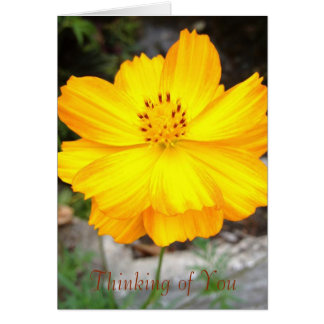 Jamaica Flower Thinking of You Greeting Card