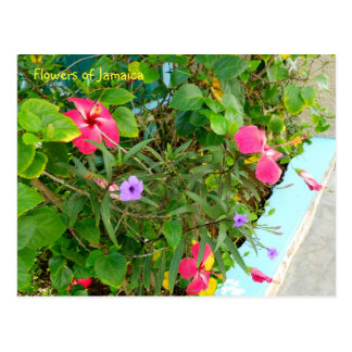 Jamaica Pink Tropical Flowers Postcard