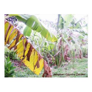 Jamaican Country Garden Postcard