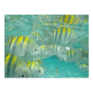 Jamaican Fish Card