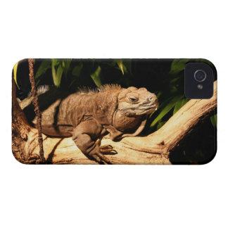 Jamaican Iguana, Cyclura collei, Blackberry case