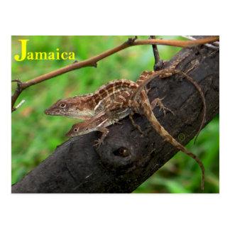 Jamaican Lizards Postcard