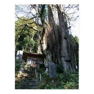 japan shrine postcard