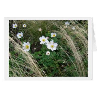 Japanese Anemone - Photograph Card