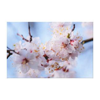 Japanese Apricot Blossom Canvas Print