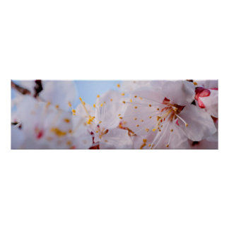 Japanese Apricot Blossom Poster