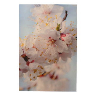 Japanese Apricot Blossom Wood Canvas