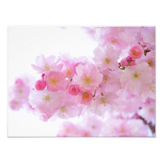 Japanese Cherry Blossom Photograph