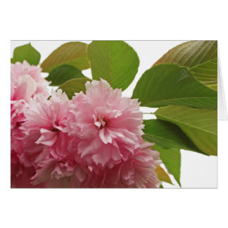 Japanese Cherry Card
