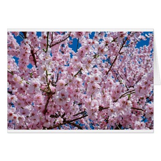 Japanese cherry Flower Card
