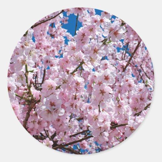 Japanese cherry Flower Classic Round Sticker