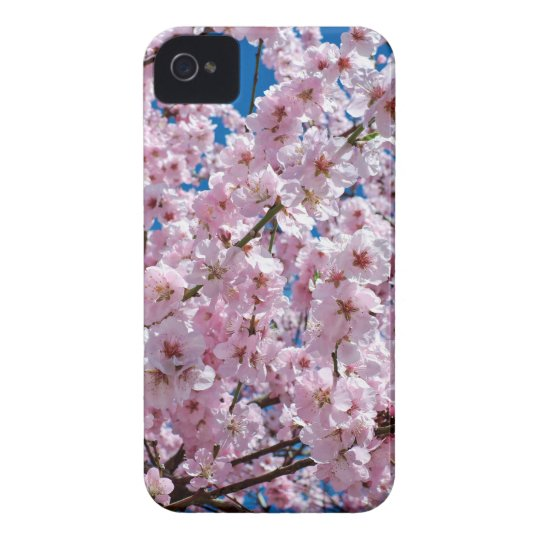 Japanese cherry Flower iPhone 4 Cases