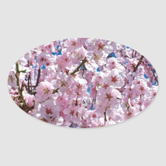 Japanese cherry Flower Oval Sticker