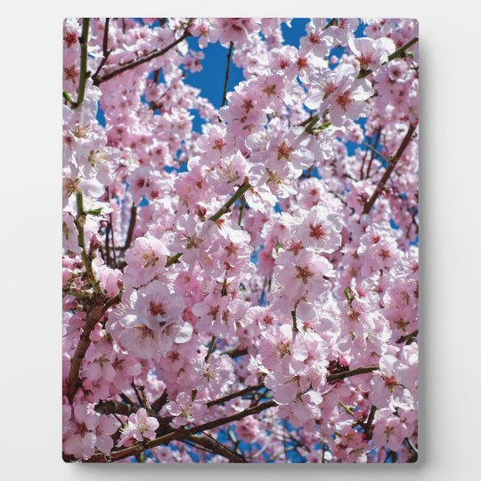 Japanese cherry Flower Plaque