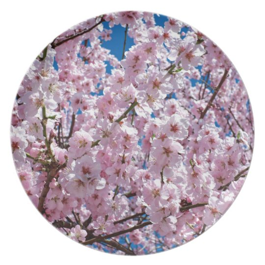 Japanese cherry Flower Plate