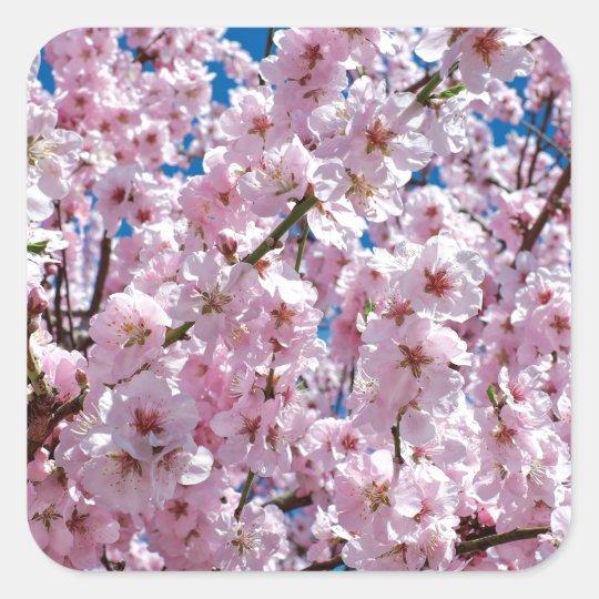 Japanese cherry Flower Square Sticker