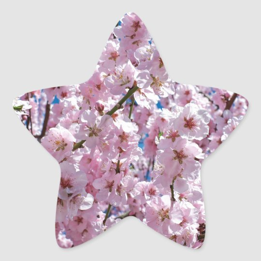 Japanese cherry Flower Star Sticker