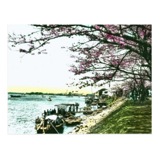 Japanese Cherry Trees in Blossom, Vintage Postcard