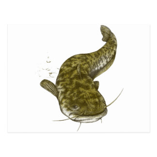 Japanese common catfish postcard