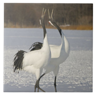 Japanese Cranes dancing on snow Ceramic Tiles
