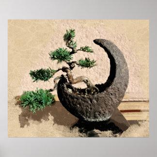 Japanese Evergreen Bonsai in Crescent Moon Planter Poster