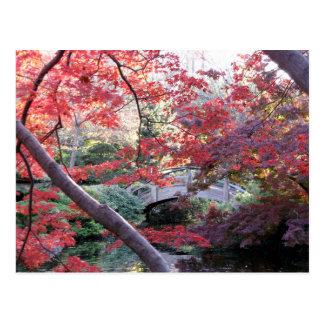 Japanese garden bridge behind red autumn maples postcard
