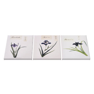 Japanese Iris Flowers Watercolors Wrapped Canvas