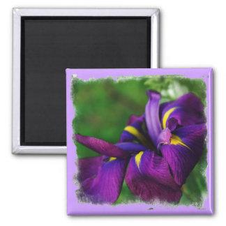 Japanese Iris Magnet