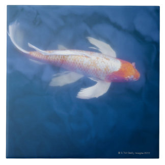 Japanese koi fish in pond, high angle view tile