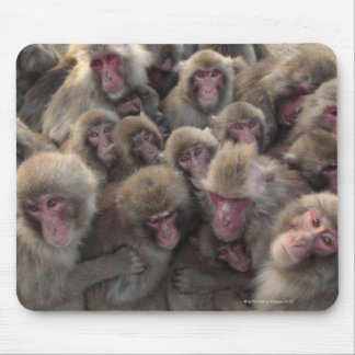 Japanese macaque (Macaca fuscata) huddled Mouse Pad