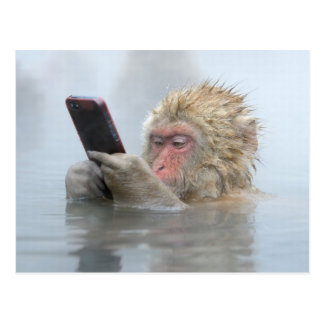 Japanese Macaque With A Cellphone Postcard