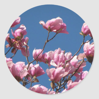 Japanese Magnolia Blooms Classic Round Sticker