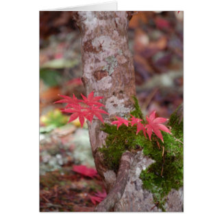 Japanese Maple and Moss Card