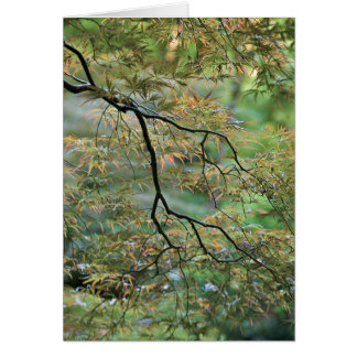 """Japanese Maple Branch"" Card"