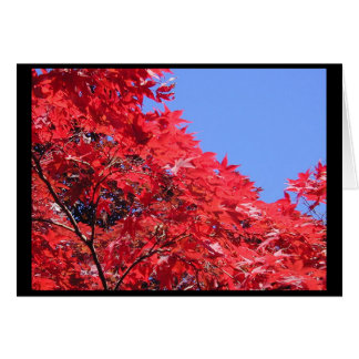 Japanese Maple Card