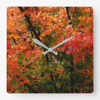 Japanese Maple in Fall Square Wall Clock