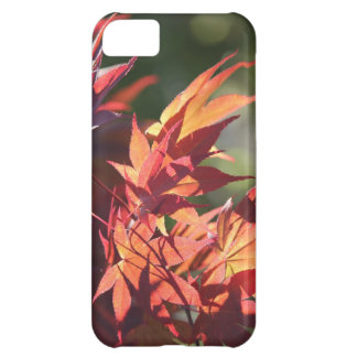 Japanese maple leaf IPhone case Case For iPhone 5C